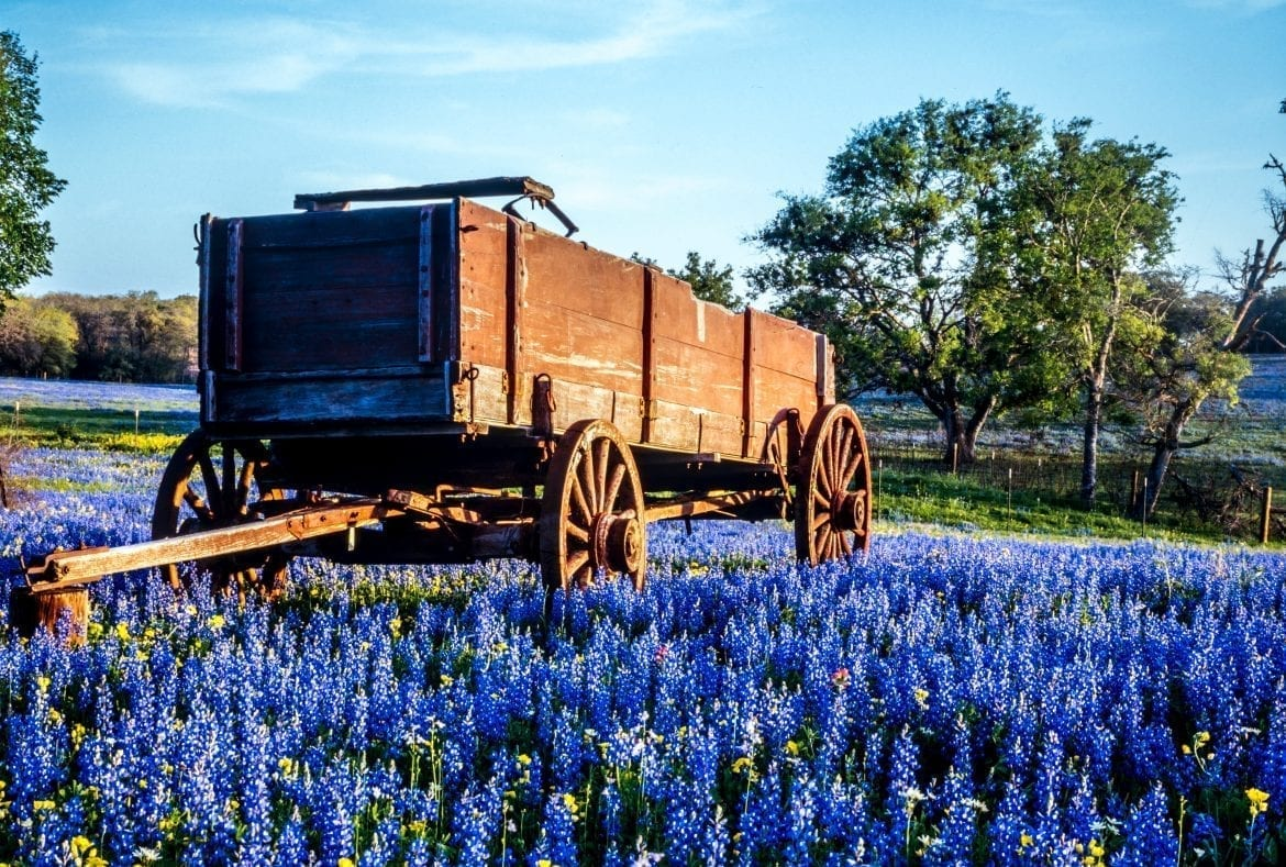 Wooden cart parked in a Texas field surrounded by bluebonnets. Beautiful countryside like this close by many of the best weekend getaways in Texas!