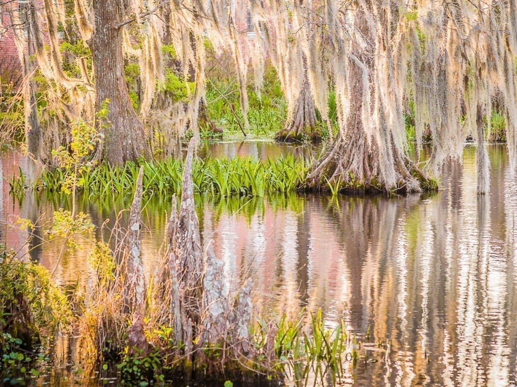 Swamp near Lafayette Louisana with trees reflecting in the water