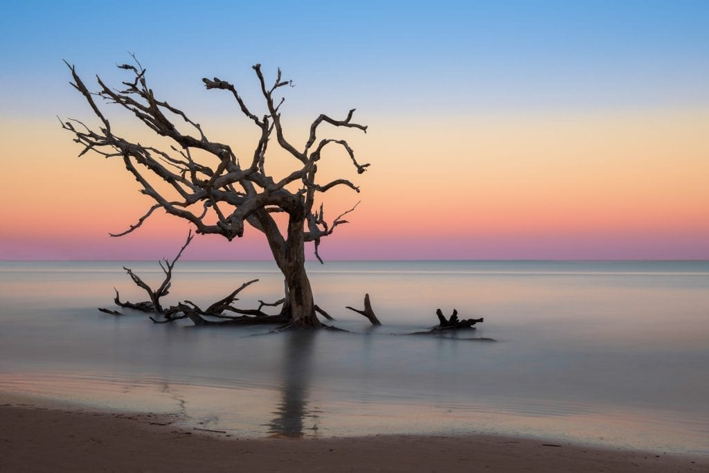 Driftwood tree on Jekyll Island Georgia at sunset, one of the best weekend trips in the south usa