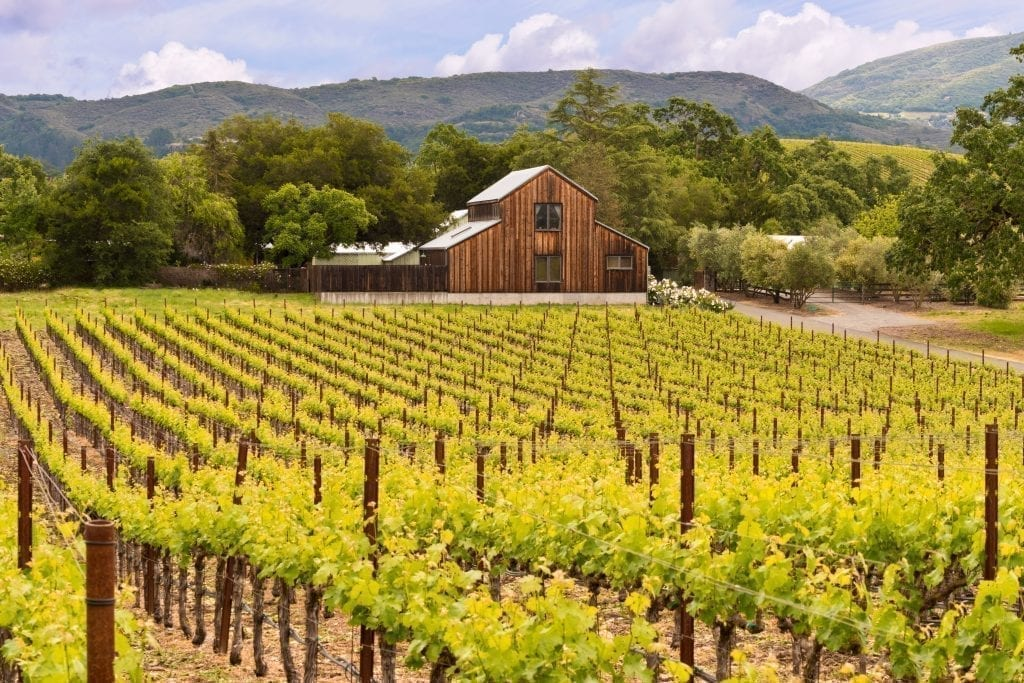 Vineyard in Napa Valley CA with a wood barn visible in the background, one of the best honeymoon destinations in usa