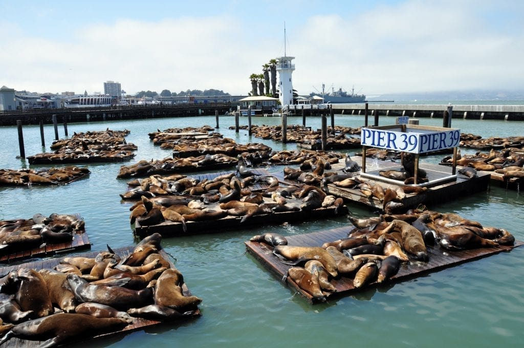 Crowds of sea lions at Pier 39, a must-see during 3 days in San Francisco CA