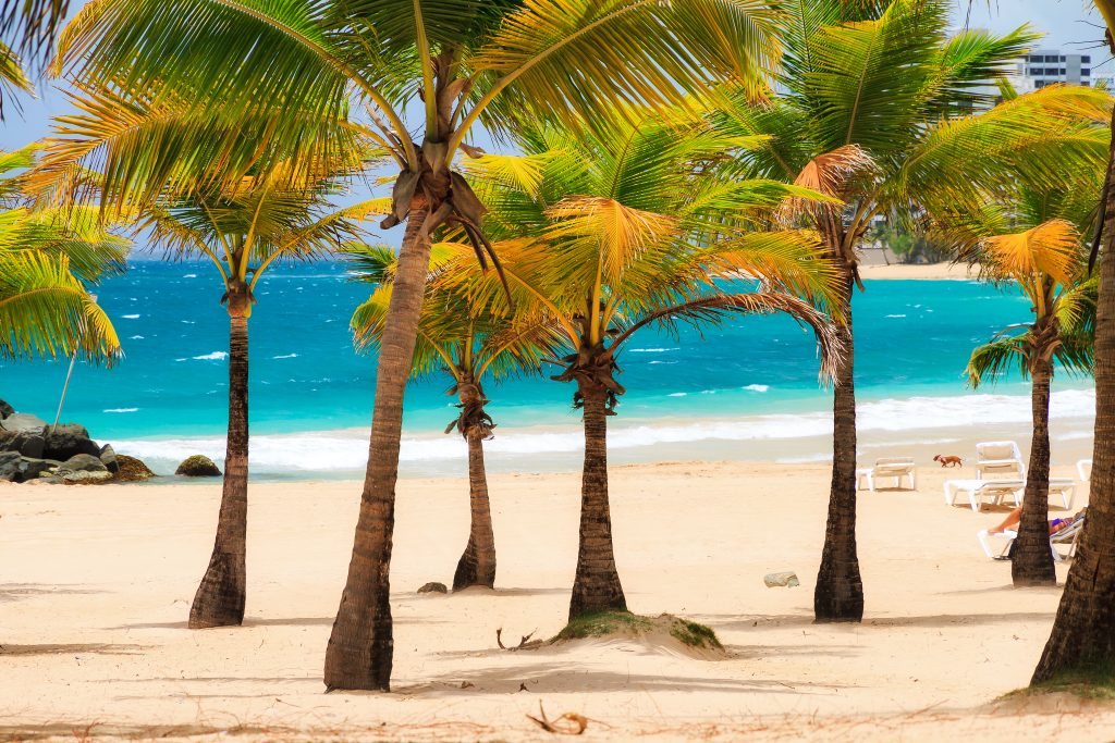 palm trees on a sandy beach in puerto rico with bright blue water in the background