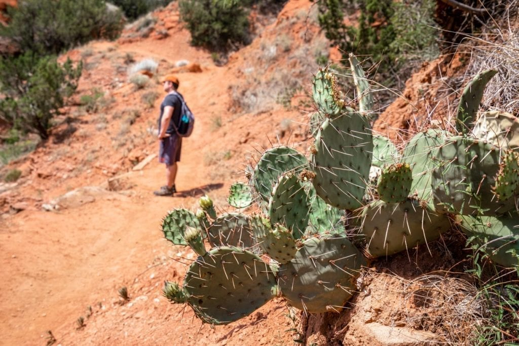 Photo of a cactus near the trail in Palo Duro Canyon, Jeremy Storm is visible in the background