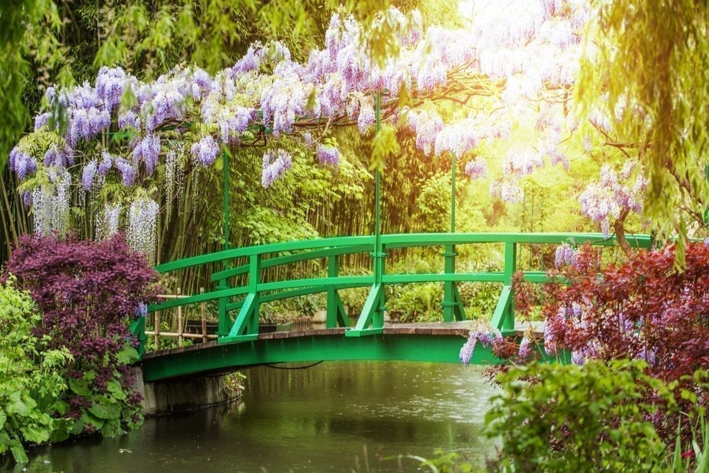 Famous green footbridge in Monet's garden in Giverney with blooming wisteria stretching over the top of the bridge.
