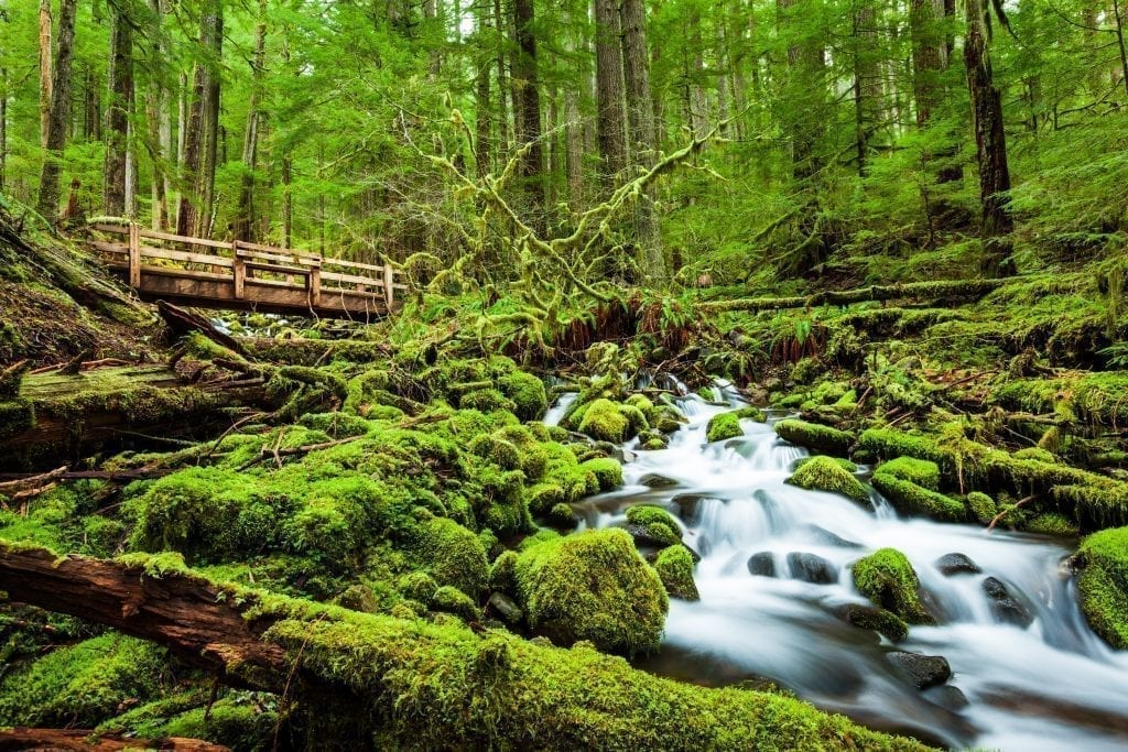 Forested trail in Olympic National Park with a river flowing across the photo. Olympic National Park definitely belongs on your USA bucket list!