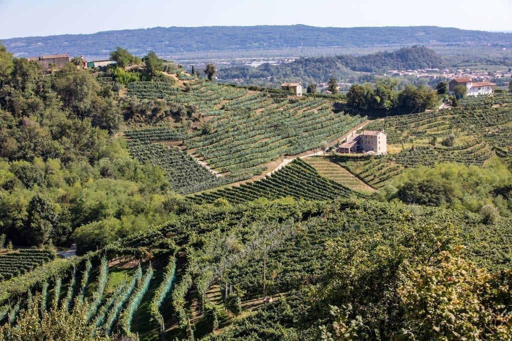 the prosecco region of italy with sprawling vineyards