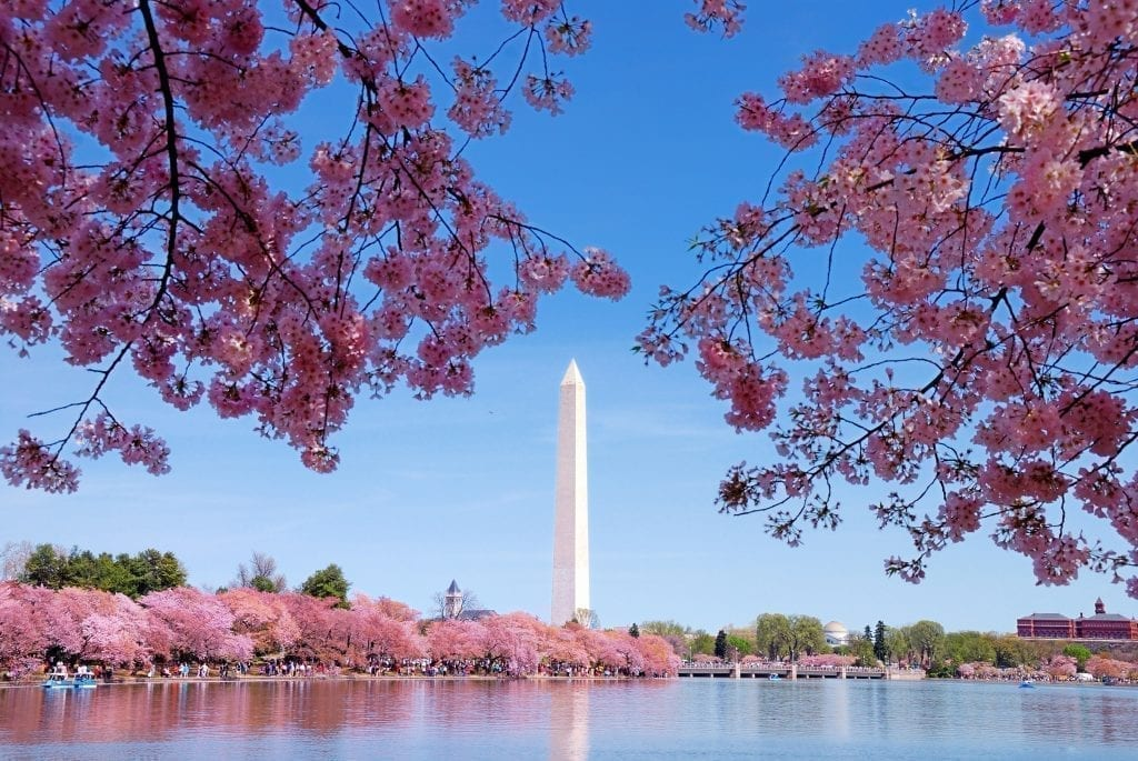 Washington Monument in Washington DC framed by cherry blossoms in the foreground. Washington DC is one of the best places to visit in the United States
