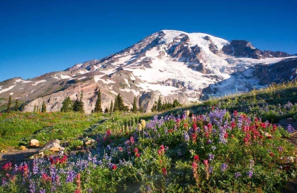 Snowcapped Mount Rainier with wildflowers in the foreground, one of the most beautiful places in usa