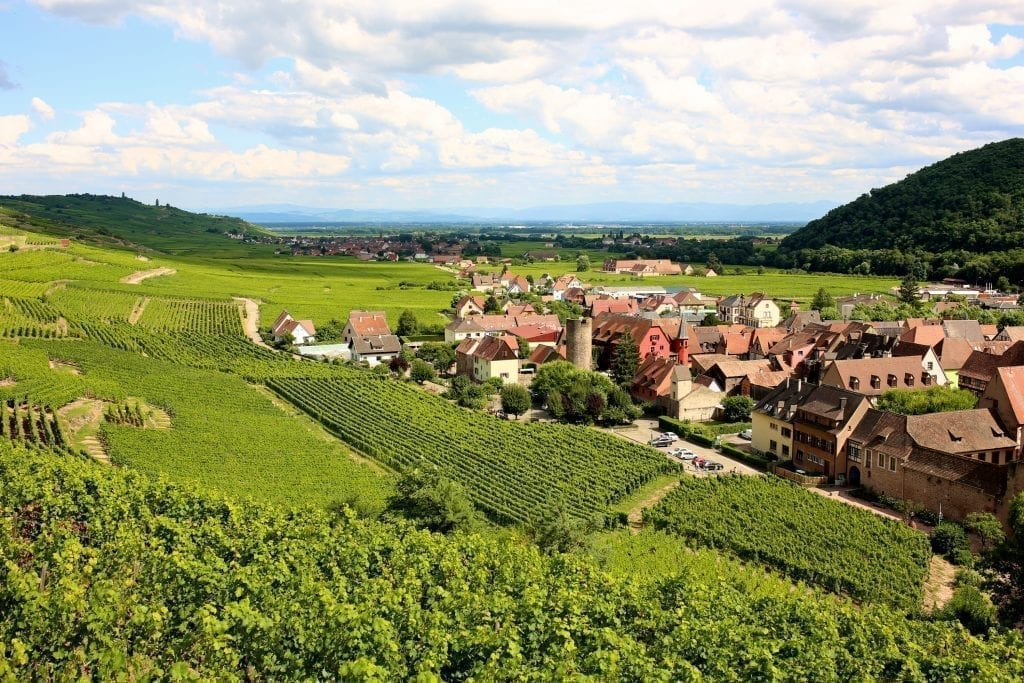 Vineyards along the Alsace Wine Route with a village visible in the distance on the right side of the photo
