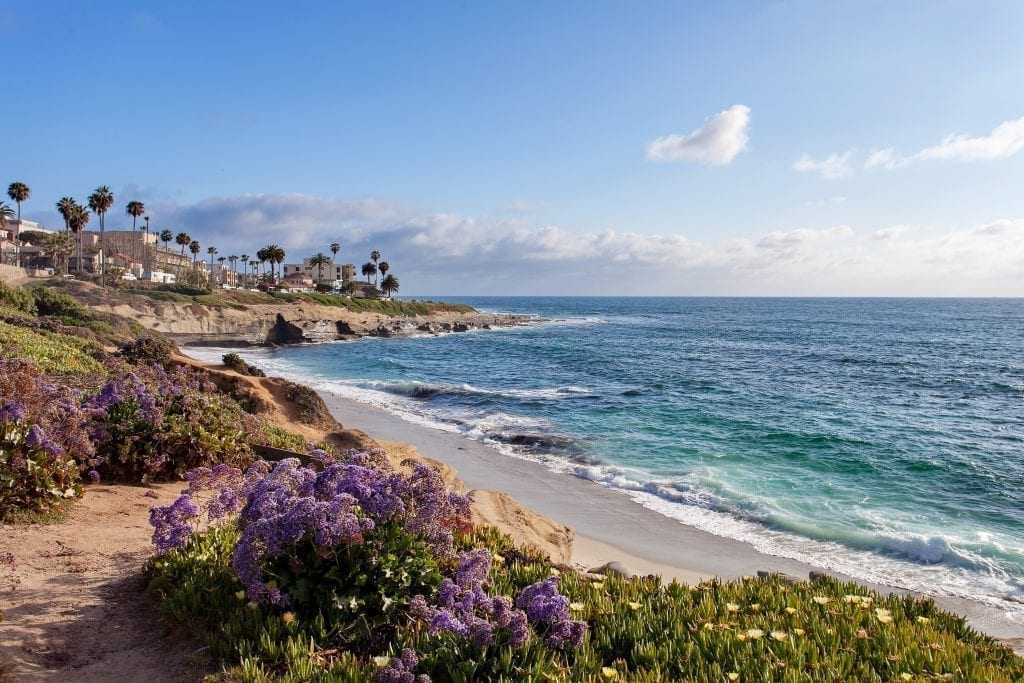 Beach in La Jolla California with purple flowers in the foreground, a fantastic stop on a west coast usa road trip itinerary