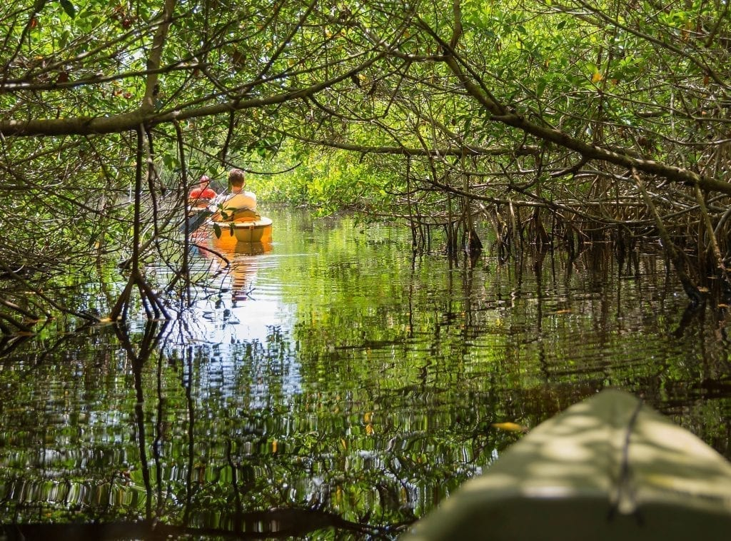2 kayaks in the mangrove tunnels at everglades np, one of the best national parks to visit in february january december