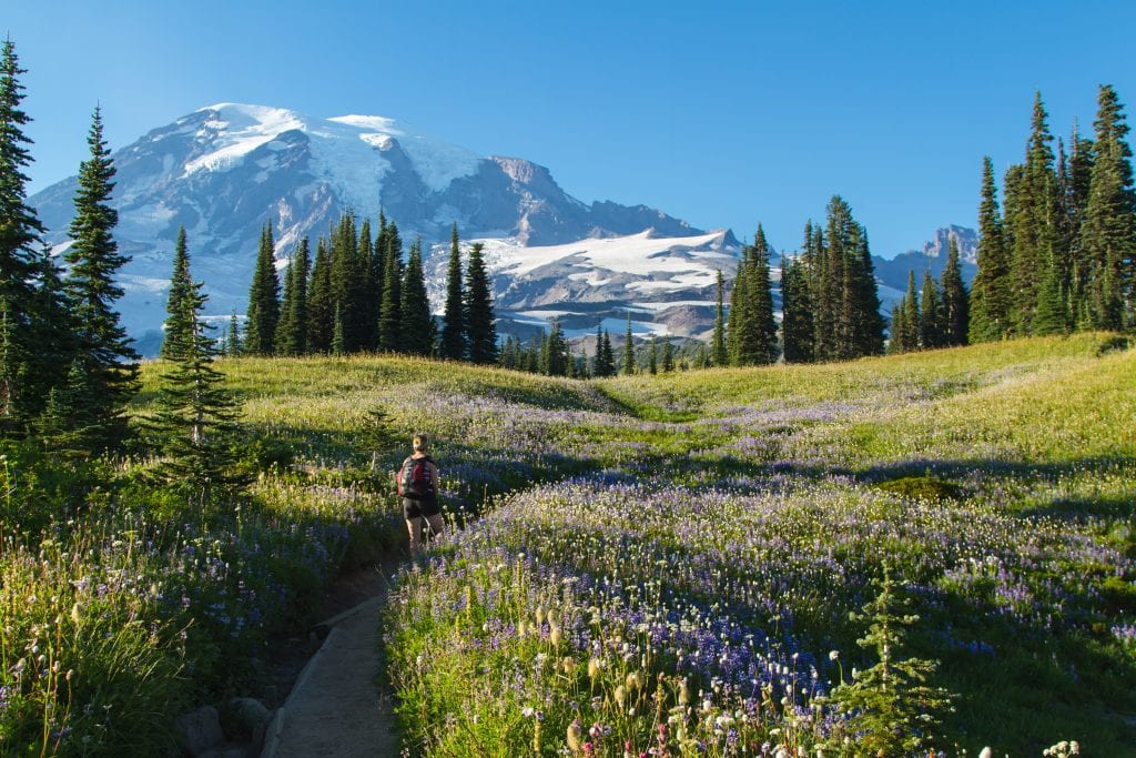 hiker in a field of wildflowers in mount rainier np with mount rainier visible in the background