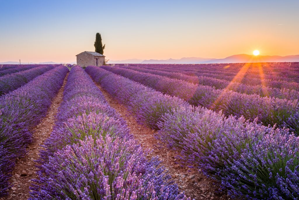 field of lavender in provence at sunset, one of the best europe travel bucket list destinations