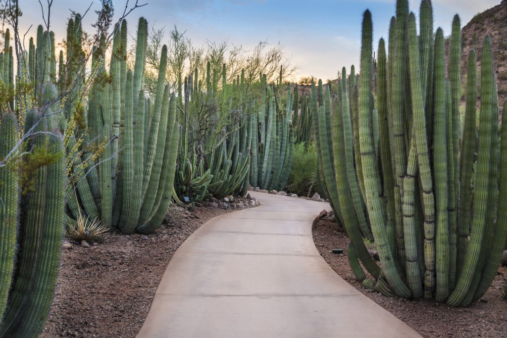 photo of a paved sidewalk path leading through cacti in phoenix, one of the most beautiful places in az to visit