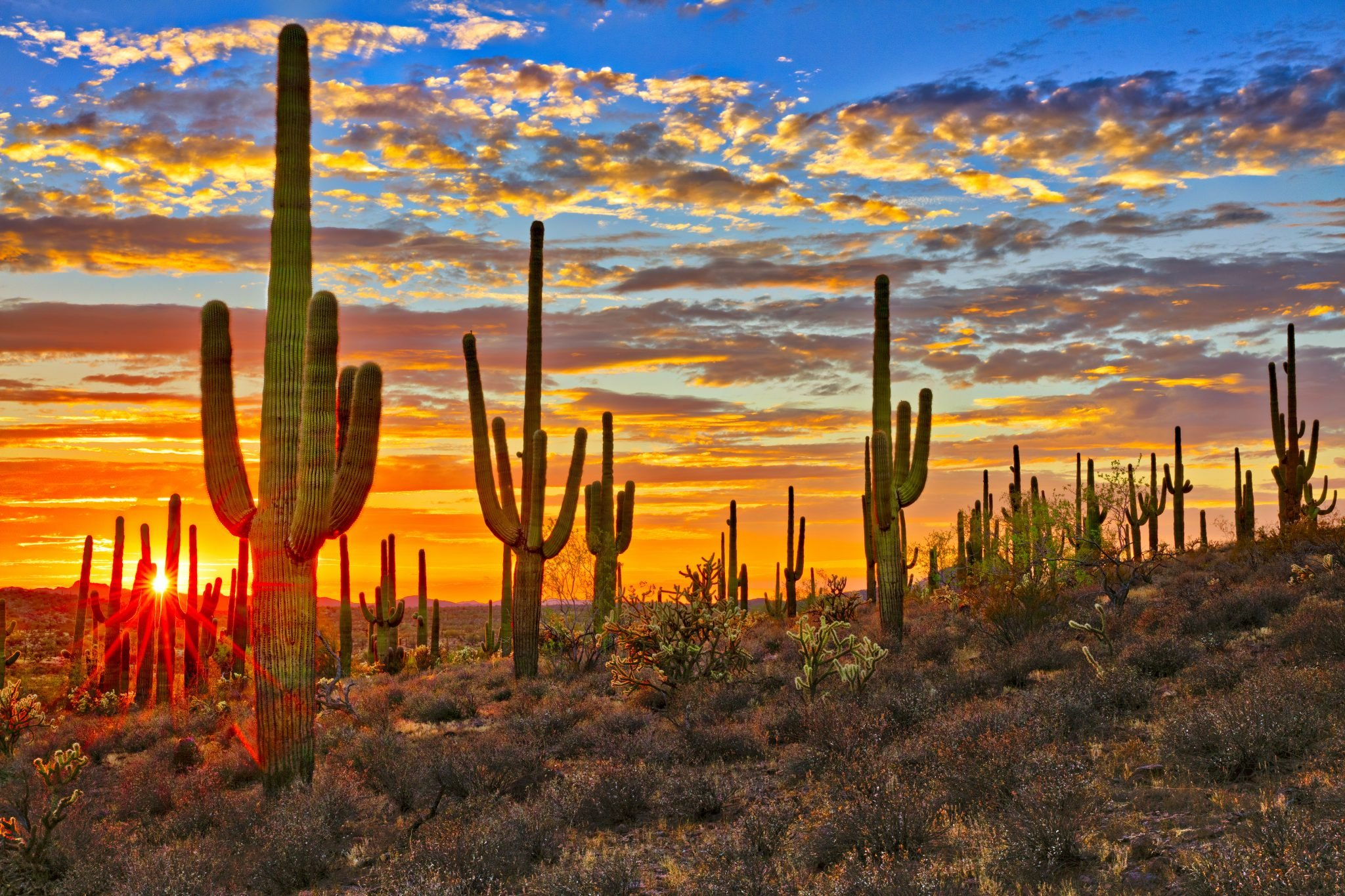 sunset over sonoran desert with saguaro cacti in foreground near phoeniz az, one of the best places to visit in arizona
