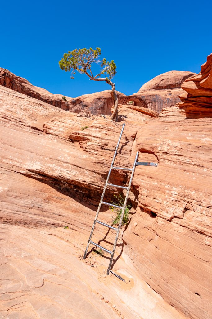 small ladder as seeing when hiking corona arch trail