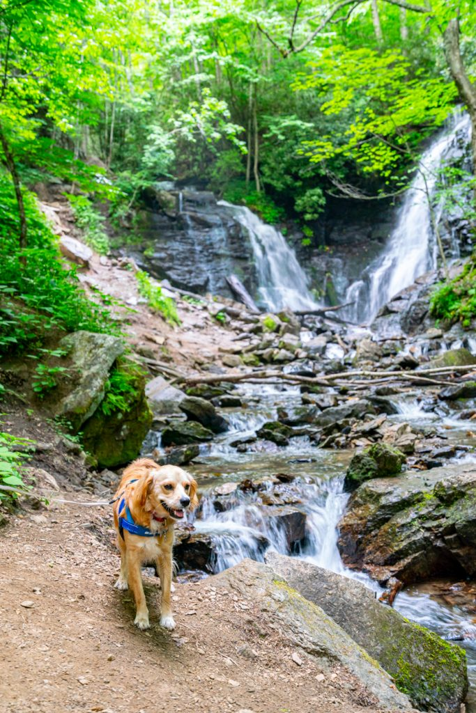 ranger storm in front of soco falls near maggie valley nc