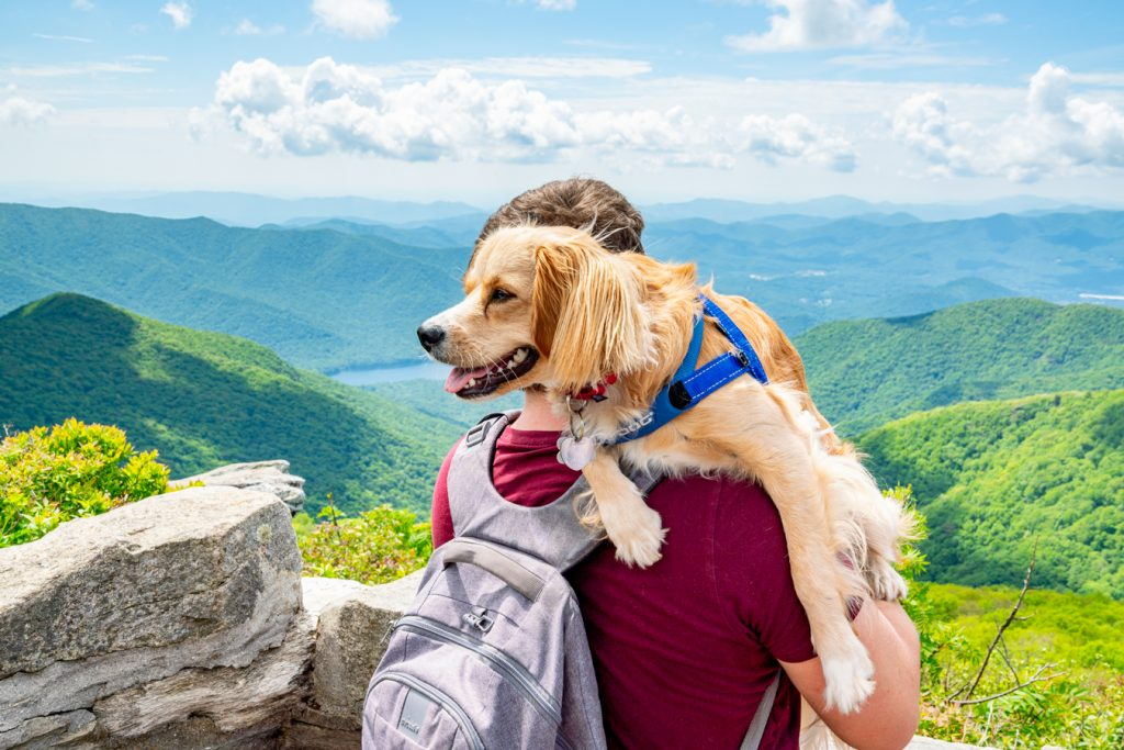 jeremy storm and ranger storm at craggy pinnacle blue ridge parkway