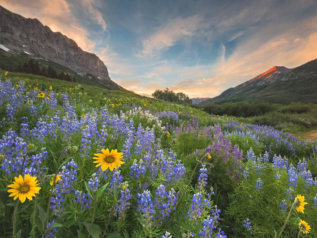 wildflowers in the mountains at sunset near crested butte, one of the best places to see in colorado