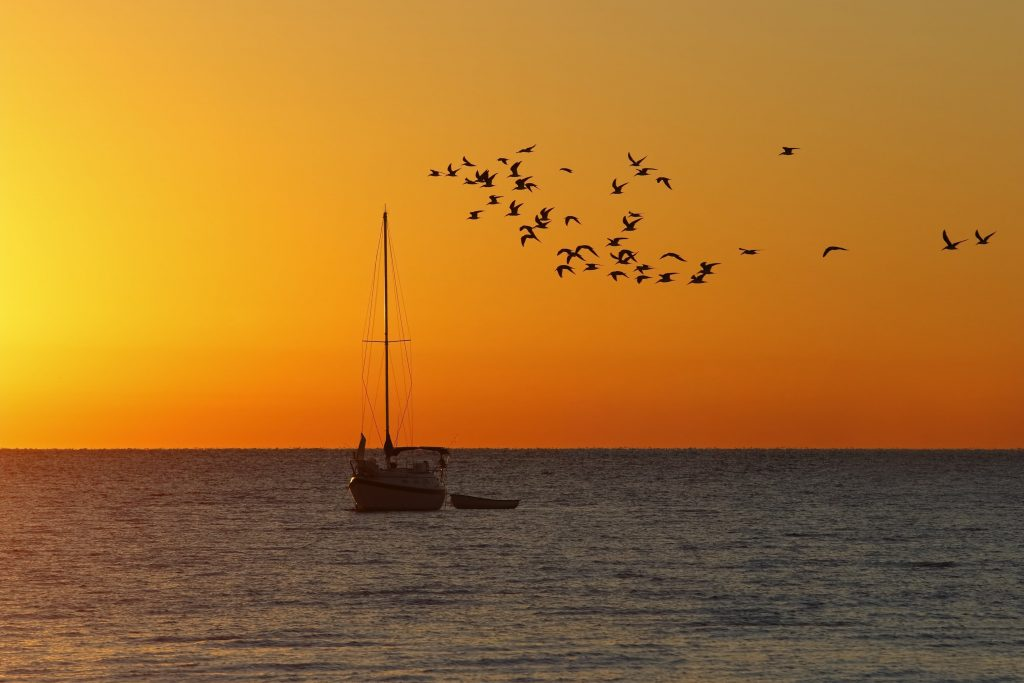 sailboat in the water at sunrise with a flock of seagulls in cedar key florida, november vacation spot in usa